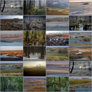 Kolaż zdjęć przedstawiających krajobrazy doliny Biebrzy o różnych porach roku